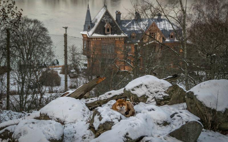 Skansen stockholm stedentrip